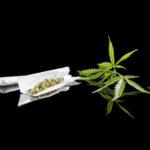Cuatro razones para entender por qué el cannabis no es inocuo